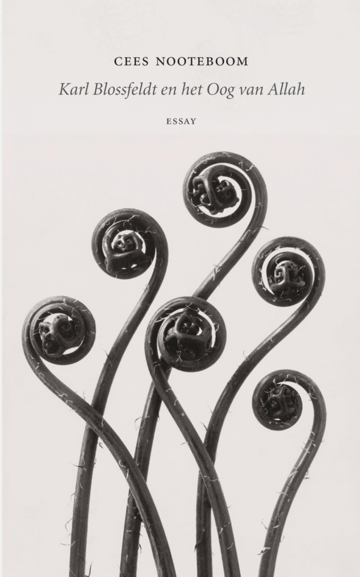 Karl Blossfeldt en het Oog van Allah - Ceea Nooteboom